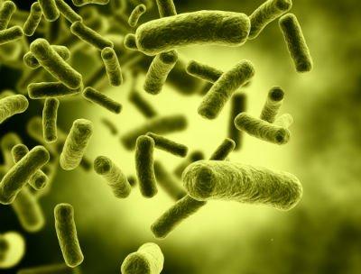 Bacteria MRSA